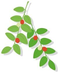 植物性プラセンタ